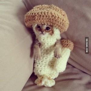 Cat मशरूम :3