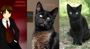 Anthony vs Spiderleg vs Coal