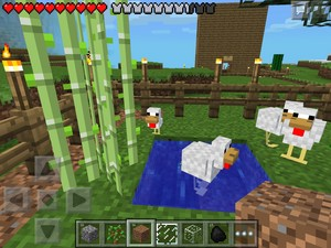 The chicken pool at the chicken farm