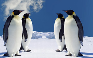4 King Penguins wolpeyper