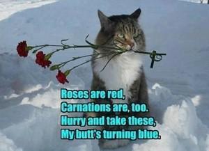 バラ are red :P