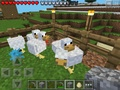Group of minecraft chickens  - random photo