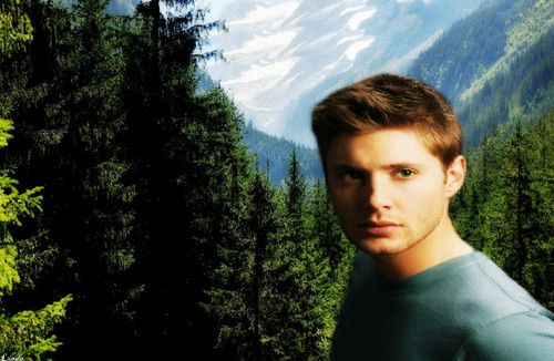 スーパーナチュラル 壁紙 with a ponderosa, a douglas fir, and a mountain hemlock called Jensen Ackles