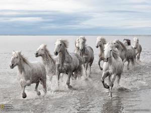 Wild घोड़े