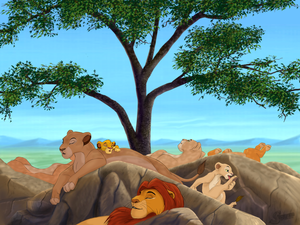 Relaxing day for the lions of Priderock