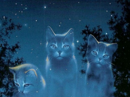 Warrior Cats Book Series wallpaper probably with a tom, a cat, and a kitten entitled Skyclan Cats