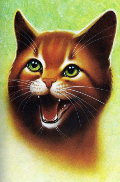 Warrior Cats Book Series Images Firestar Head Wallpaper And Background Photos