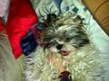 my baby pup