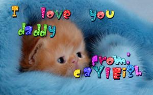 cute loving 小猫