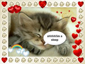 sleppy kitten