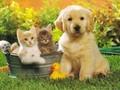 cats - Best Friends wallpaper