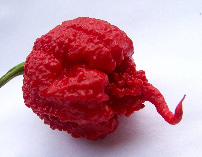 World 39 S Hottest Chilli Pepper