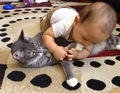 Cat Playing With A Baby - cats photo