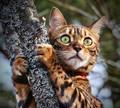 cats - Cat                         wallpaper