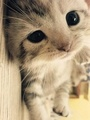 Cute Little Kitten - cats photo