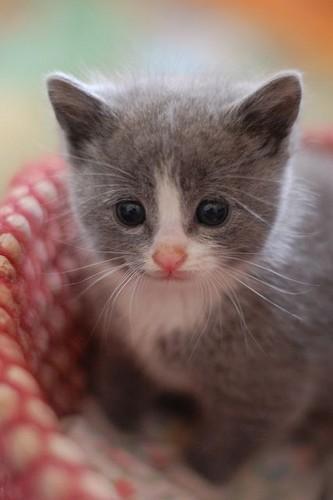 Little Kitten My Favorite Cat Free Download