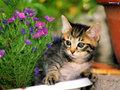 cats - Cute Little Kitty wallpaper
