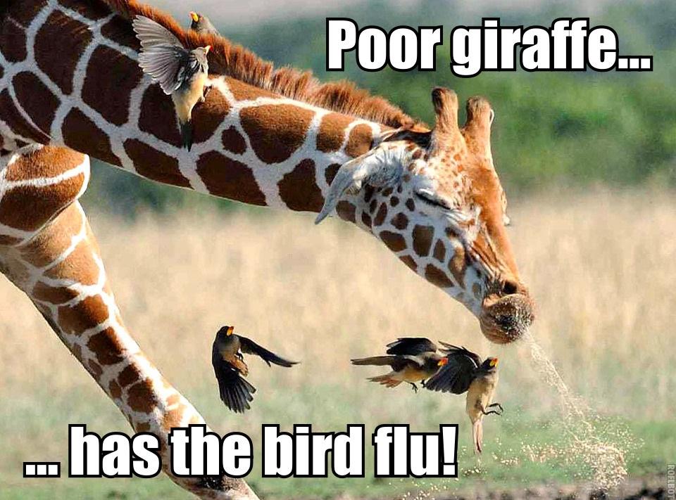 Funny giraffe cartoon meme - photo#26
