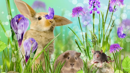 Happy Easter All My অনুরাগী দেওয়ালপত্র entitled Happy Easter