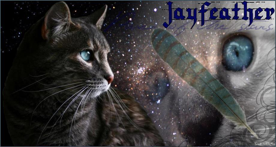 Jayfeather-jayfeather-36818194-920-490.j