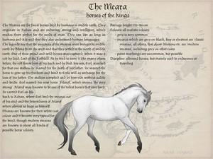 Mearas breedsheet by okami-haru.deviantart.com