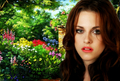 Kristen in Spring - twilight-series wallpaper