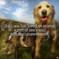 Until one has loved an animal - animals photo