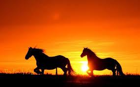 beautiful sunset 1