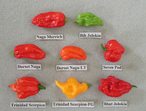bhut jolokia (gost pepper) and دوستوں