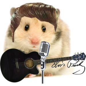 elvis presley hamster