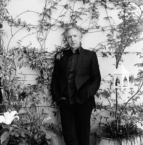 alan rickman fondo de pantalla containing a business suit, a suit, and a well dressed person called Alan and vines