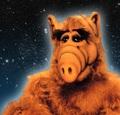 Alf dans les étoiles - alf photo