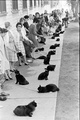 An Assortment Of Black Cats - cats photo