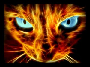 Awesome feuer cat