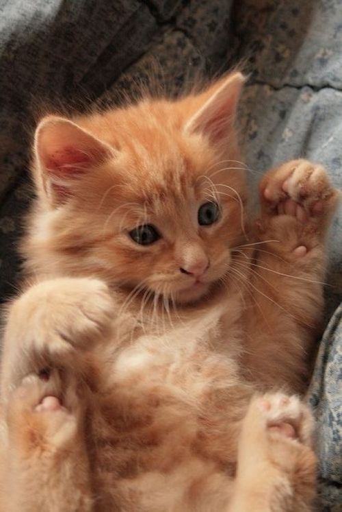 kitten eye discharge