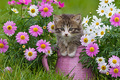 Cat With Flowers - cats photo