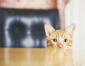 Cute Cat