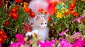 Kitten with flowers - cats photo