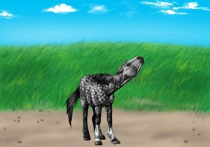 My horse on Small cavalos