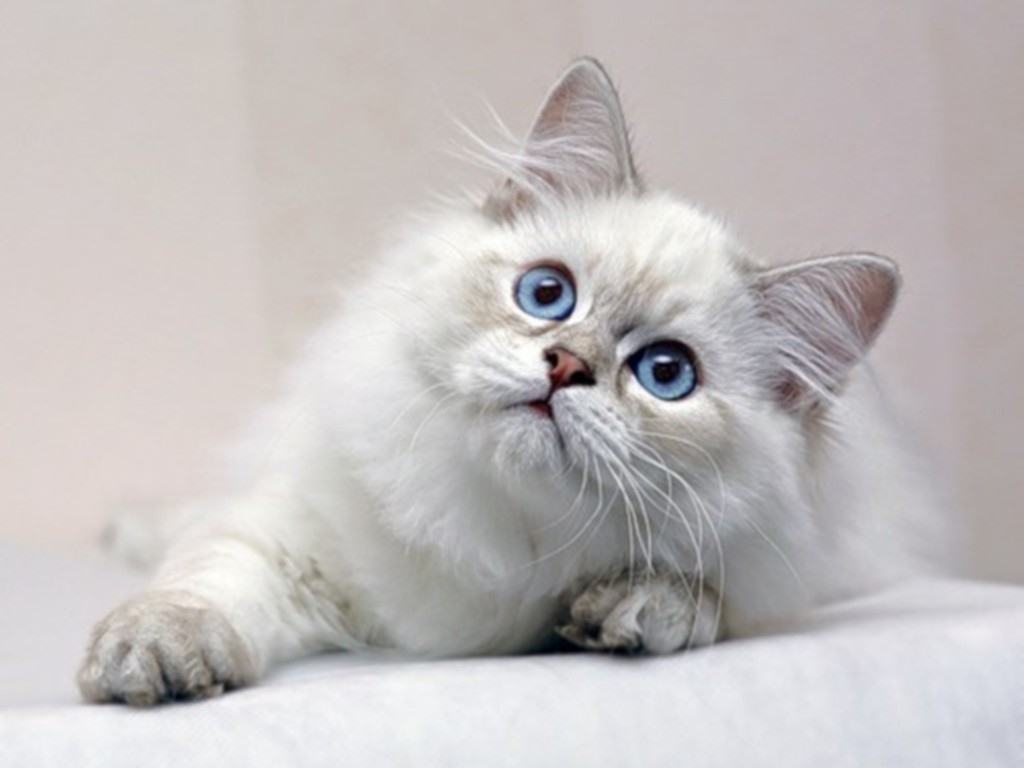 Cats Wallpaper (36904982)