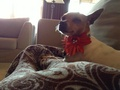 Piper my dog - youtube photo