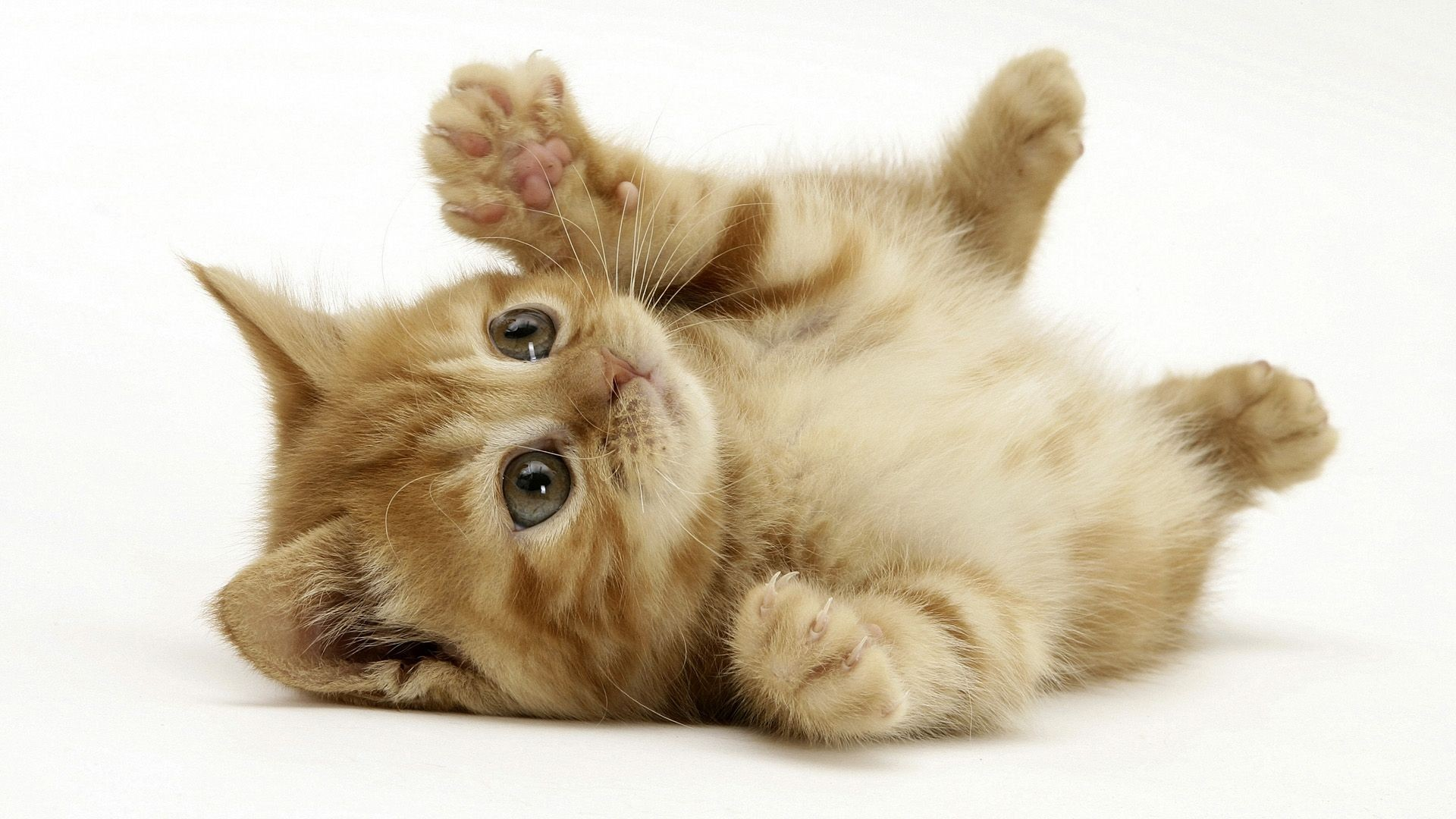Cats Images Playful Kitty HD Wallpaper And Background Photos
