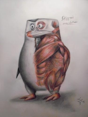 पेंग्विन्स ऑफ मॅडगास्कर वॉलपेपर titled PoM - Anatomy II.