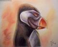PoM - Denmark - penguins-of-madagascar fan art