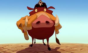 Pumbaa has Simba