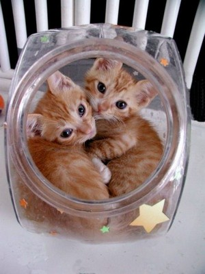 Two Kittens In A Cookie Jar