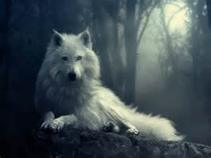 White wolf At Night In Forest
