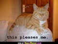 Your cat overlord is pleased :3 - lol-cats photo