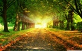 autumn-path-wallpaper- - beautiful-pictures wallpaper