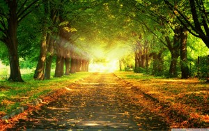 autumn-path-wallpaper-
